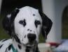 aramis-cucciolo-1-685x1024.jpg