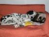 Miki e il suo cuscino preferito