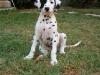 Max cucciolo