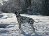 Max sulla neve