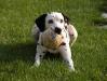 La palla è mia!