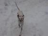 Pongo e la sua prima neve!