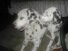Ombretta cucciola e la sorellona adottiva Scheyla