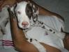 Ma che comodo questo cuscino umano!
