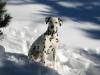 Spot e la prima neve